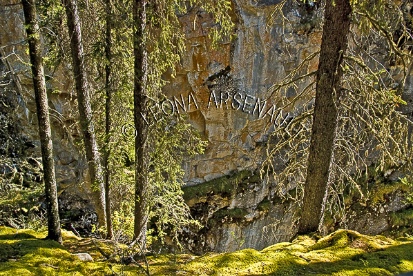 CANADA;ALBERTA;BANFF NATIONAL PARK;JOHNSTON CANYON;FOREST;TREES;LIMESTONE;HORIZONTAL